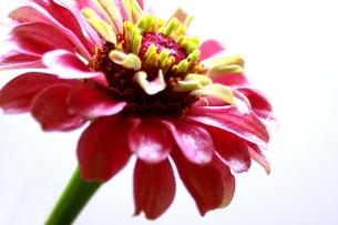 花のアップの写真素材 [FYI00290232]