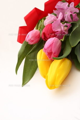 チューリップ 春の花束の写真素材 [FYI00290243]