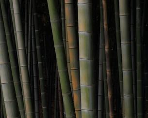 竹林の写真素材 [FYI00290361]