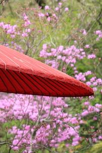 和傘の写真素材 [FYI00290552]