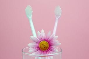 歯ブラシの写真素材 [FYI00290566]