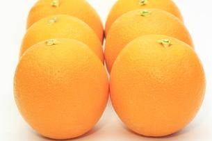 オレンジの写真素材 [FYI00290712]