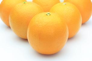 オレンジの写真素材 [FYI00290738]