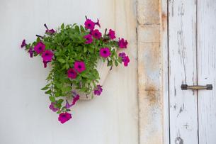 ハンギングポットと花の写真素材 [FYI00290947]