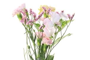 パステルカラーの花の素材 [FYI00291003]