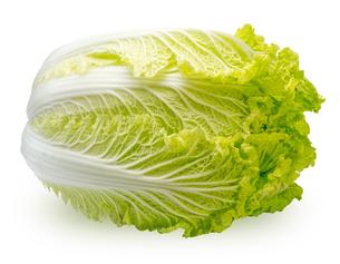 白菜の写真素材 [FYI00291025]
