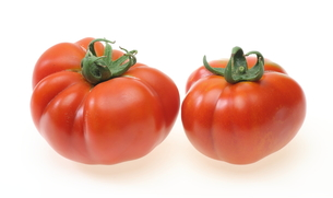 トマトの写真素材 [FYI00291542]