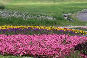 花壇の写真素材 [FYI00291608]