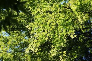 新緑の写真素材 [FYI00297512]