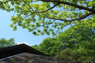 屋根よりの写真素材 [FYI00297519]