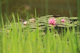 初夏水辺の風景の素材 [FYI00297557]