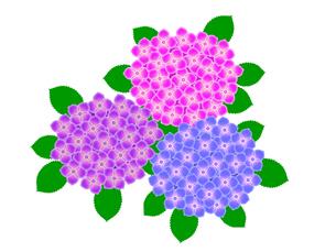 紫陽花の写真素材 [FYI00297656]