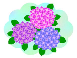 紫陽花の写真素材 [FYI00297669]