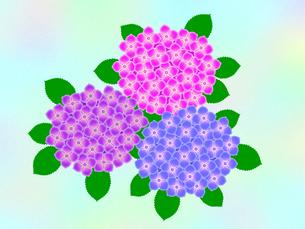紫陽花の写真素材 [FYI00297672]