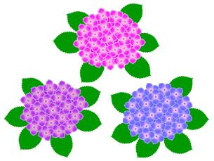 紫陽花の写真素材 [FYI00297677]