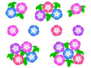 朝顔の花の写真素材 [FYI00297729]