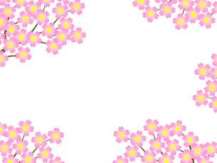 桜のフレームの写真素材 [FYI00298242]
