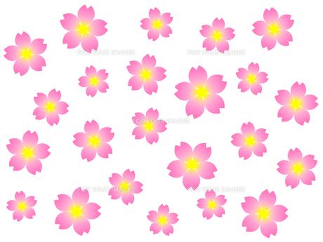桜の花の素材 [FYI00298262]