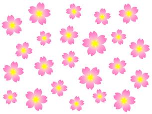 桜の花の写真素材 [FYI00298262]