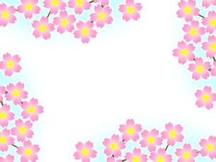 桜のフレームの写真素材 [FYI00298276]