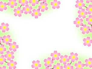 桜のフレームの写真素材 [FYI00298285]