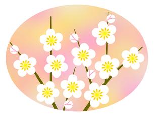 梅の花の写真素材 [FYI00298302]
