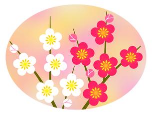 梅の花の写真素材 [FYI00298323]