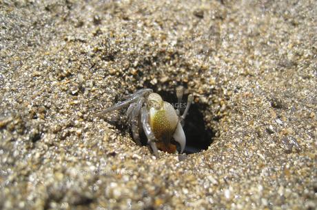砂浜のヤドカリの写真素材 [FYI00298532]