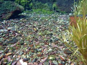 春の水中風景の写真素材 [FYI00298581]