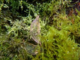 水中の落葉の写真素材 [FYI00298589]