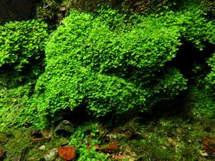 湧水の植物の写真素材 [FYI00298933]