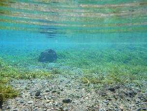 湧水の水中風景の写真素材 [FYI00299040]