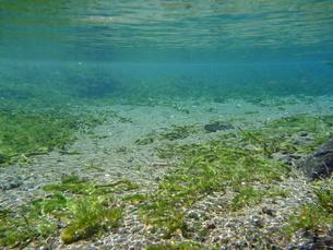 湧水の水中風景の写真素材 [FYI00299048]