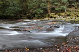秋の菊池渓谷の写真素材 [FYI00299121]