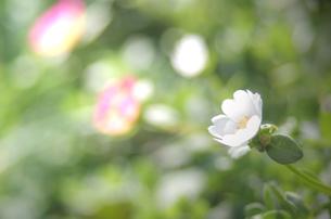 秋の草花の素材 [FYI00299297]