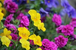 春のガーデンの写真素材 [FYI00299468]