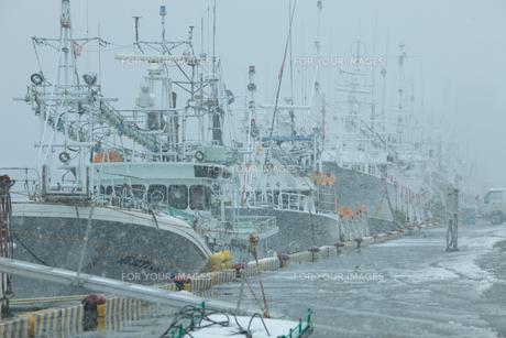 停泊している漁船の写真素材 [FYI00299685]