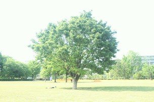 公園の木の写真素材 [FYI00299720]