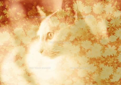 猫と秋桜(セピア)の素材 [FYI00299759]