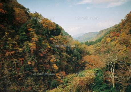 紅葉(耶馬渓谷)の写真素材 [FYI00299764]