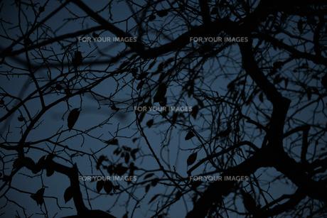 夜の枯れ葉の写真素材 [FYI00299787]