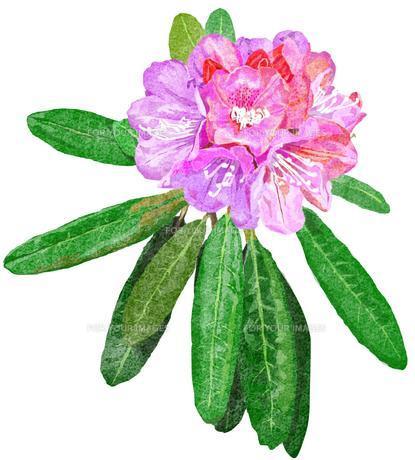 石楠花の素材 [FYI00299820]