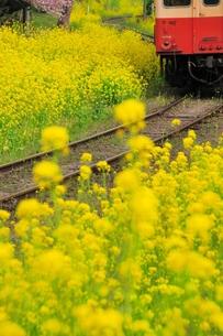 小湊鉄道の写真素材 [FYI00300036]