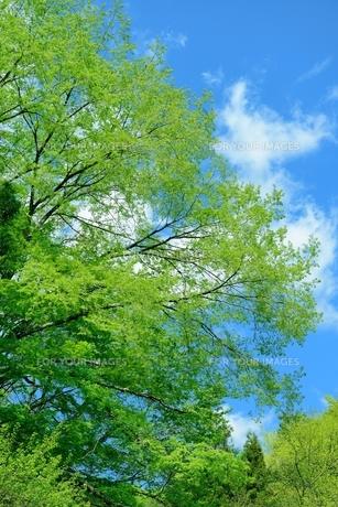 新緑の写真素材 [FYI00300081]