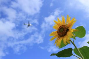 Jet meets the flowerの写真素材 [FYI00300122]