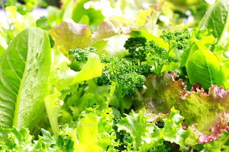 フレッシュな野菜の葉の写真素材 [FYI00300174]