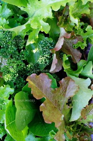 フレッシュな野菜の葉の写真素材 [FYI00300175]