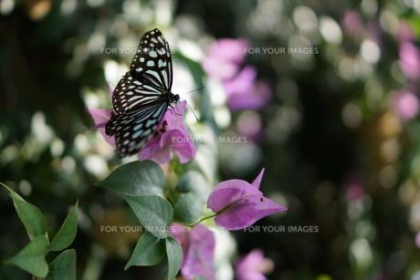 葉に止まる蝶の素材 [FYI00300292]