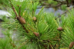 奥多摩湖周辺の紅葉風景の写真素材 [FYI00300329]
