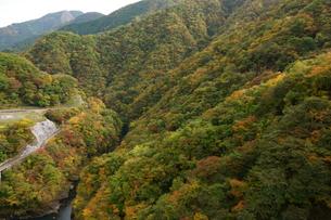 奥多摩湖周辺の紅葉風景の写真素材 [FYI00300330]